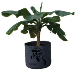 "#15 Root Pot, 17""  Wide x 15"" Tall"