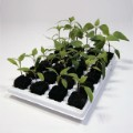 Root Riot 25 Cube Tray with Clonex Gel image 5
