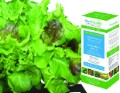 Salad Greens Seed Kit image 2