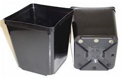 "5-1/2"" Black Square Pot case of 200"