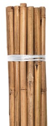 Grower's Edge Natural Bamboo 6 ft Bulk (50/Pack)
