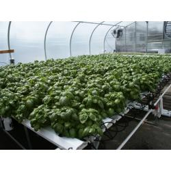 American Hydroponics Complete Commercial NFT Growing System - Basil